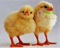 Как сделать будку для цыплят