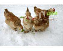 Плюсы и минусы отопления в курятнике: нужно ли курям тепло зимой?