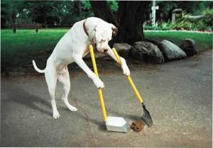 Собака убирает за собой в парке
