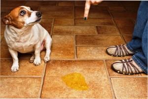 Собака нагадила на полу