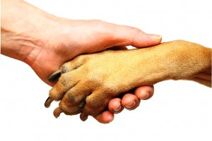 Человек и собака - дружба на век!