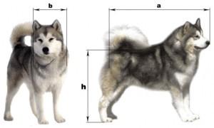 Размеры для выбора собачьей будки