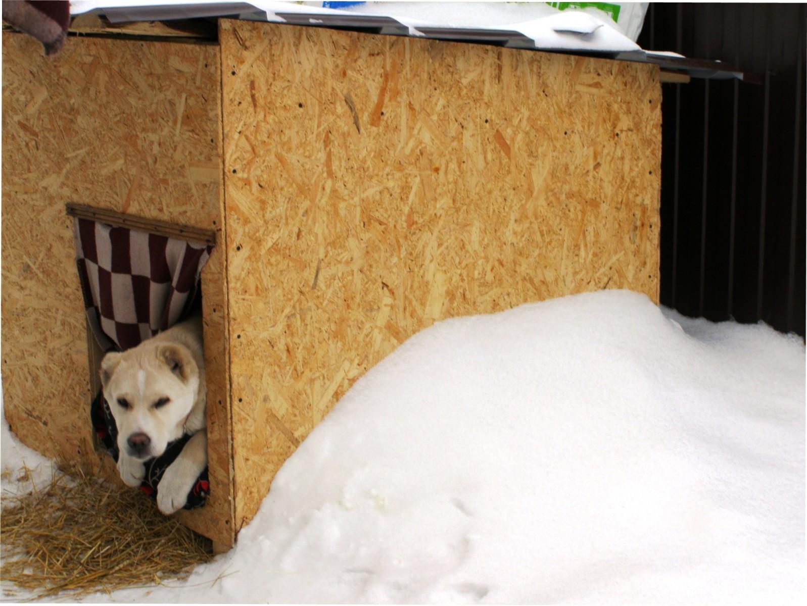 Собачья будка своими руками размеры и чертежи фото 981